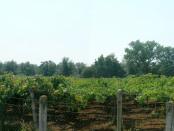 agricoltura-pontina