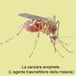 Malaria zanza